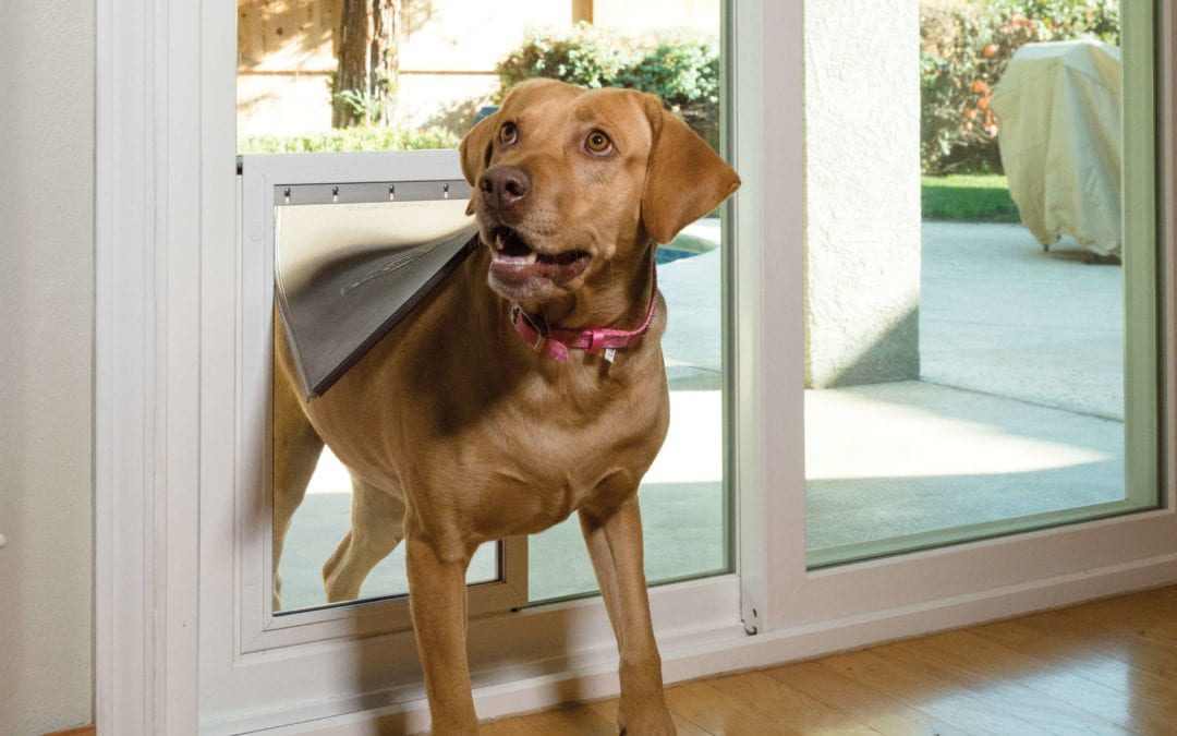 Freedom Plus Pet Doors Are AWESOME!